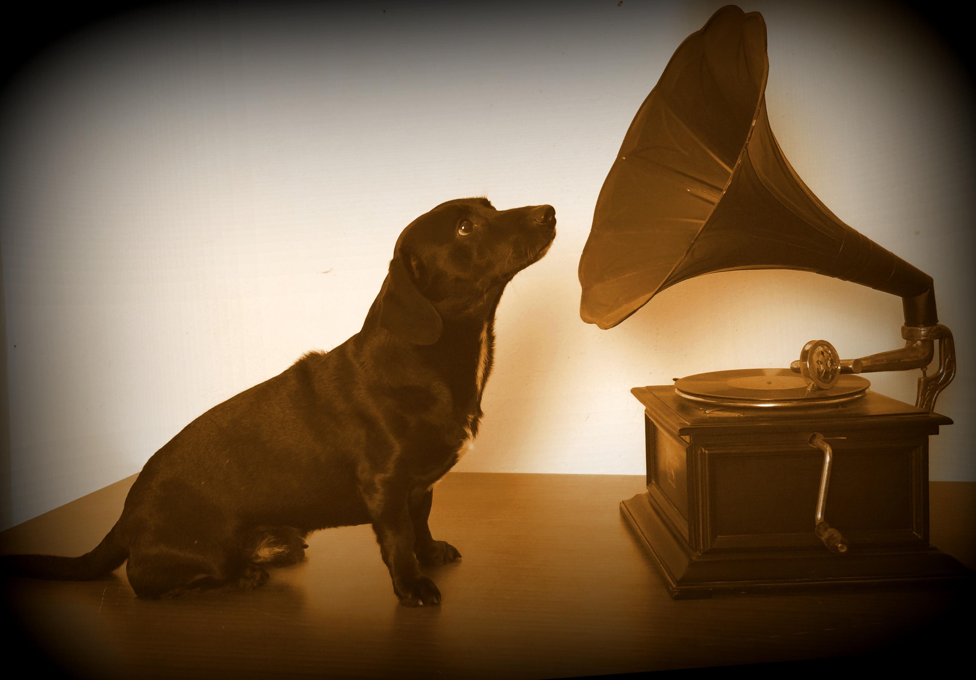 Details | Recording Dog Freddie